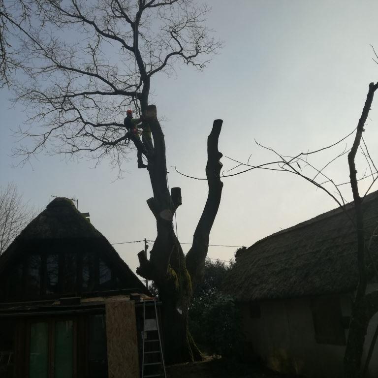 Abattage par démontage d'un arbre mal situé