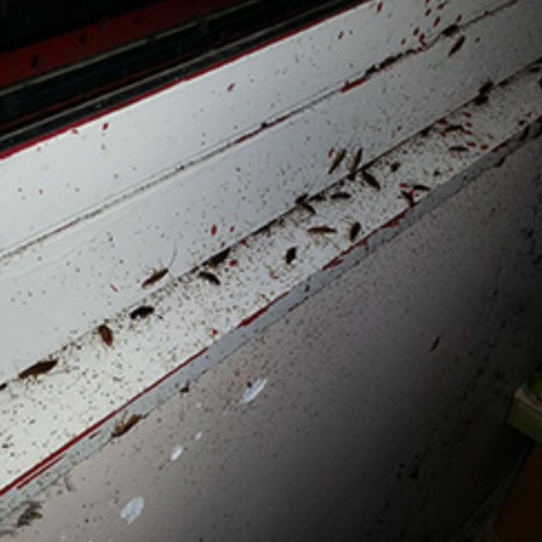 Désinsectisation des blattes