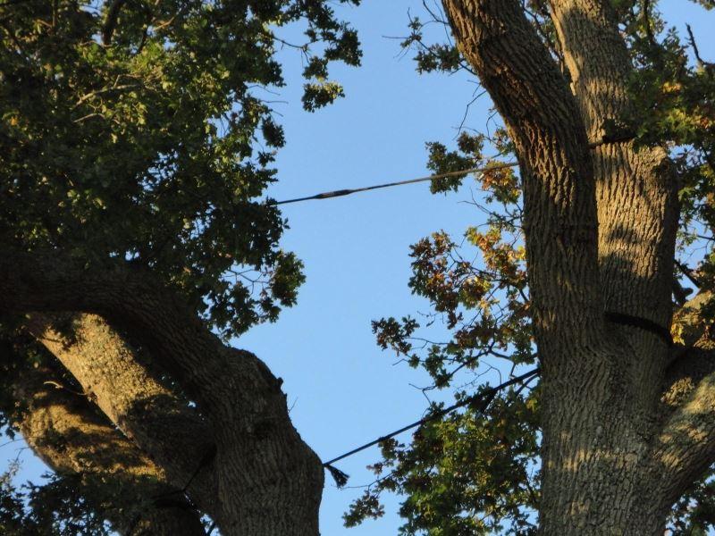 Haubanage d'un arbre